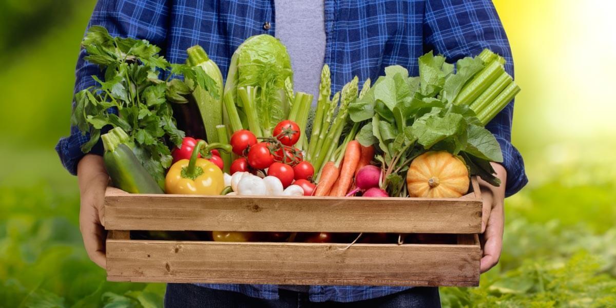 ernährungsberater-ausbildung-kosten